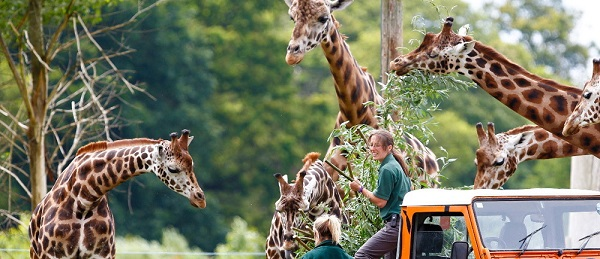 vouchers for Woburn Safari Park