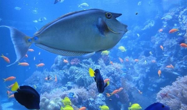 Sea Life centre vouchers